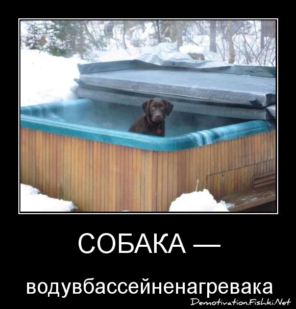 Собака —