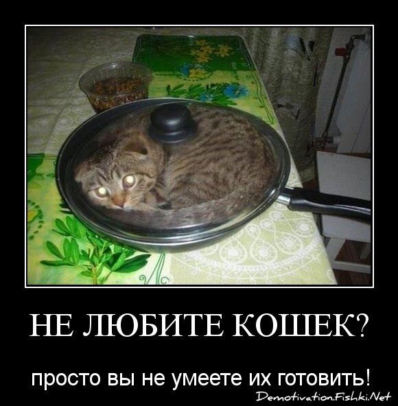 Не любите кошек?