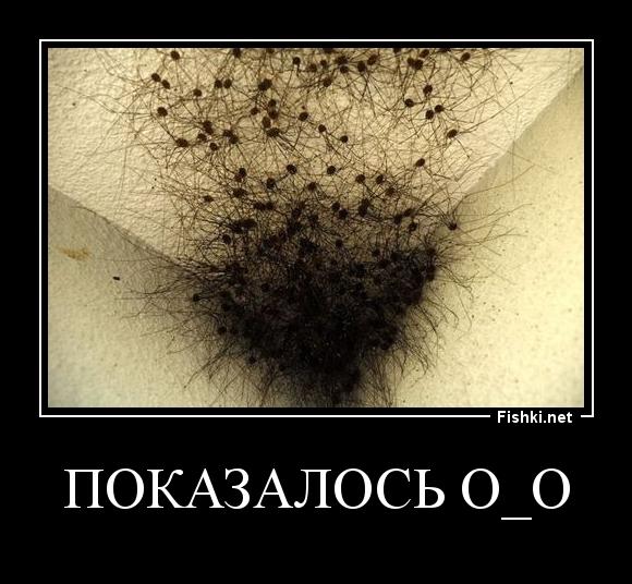 ПОКАЗАЛОСЬ о_О
