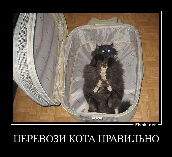перевози кота правильно