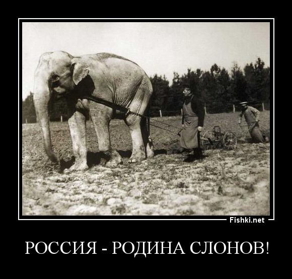 РОССИЯ - РОДИНА СЛОНОВ!