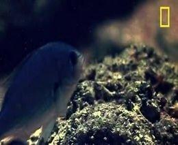 Жестокий подводный мир от zubrilov за 30 ноября 2011
