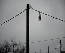 Птичка застряла в проводах