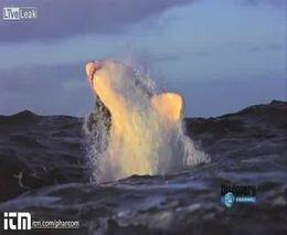 Нападение акулы в замедленной съемке