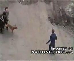 Бойцовская собака кусает людей