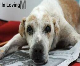Печальная история больной собаки