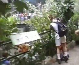 Маленький мальчик упал в вольер к гориллам