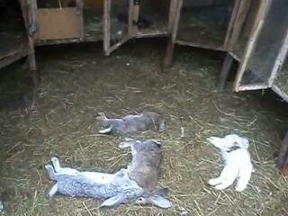 Кроличий геноцид
