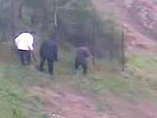 Охота на медведя от zubrilov за 28 ноября 2012