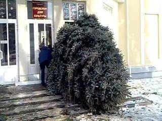 Как погубить дерево