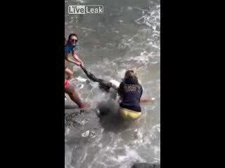 Вцепился в тюленя