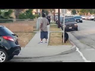 Копы застрелили собаку