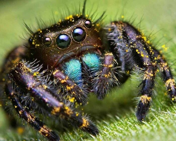 Интересные факты о пауках (11 фото)