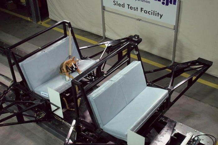 В компании Subaru думают о безопасности собак за 16 августа 2013 08:05