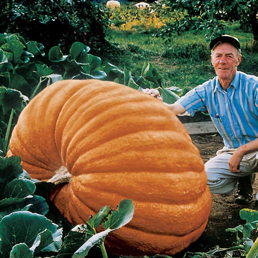 Biggest Pumpkins Ever