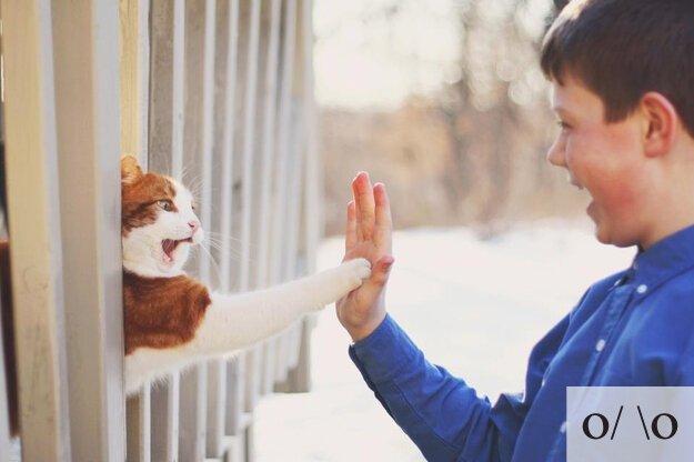 If Cats were Emoticons от Veggie за 12 oct 2012