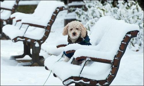 I Ain't Afraid of No Snow!