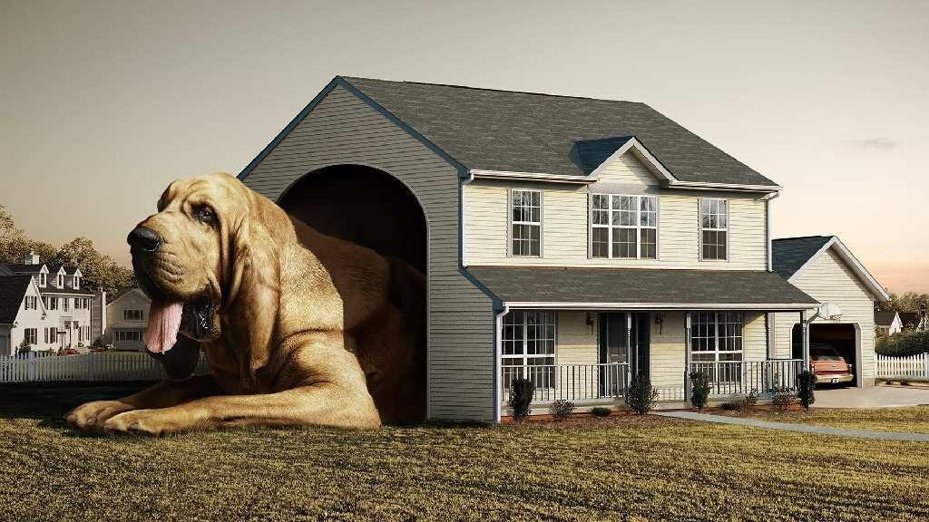 Big Dogs, Big Love от Marinara за 16 jan 2013