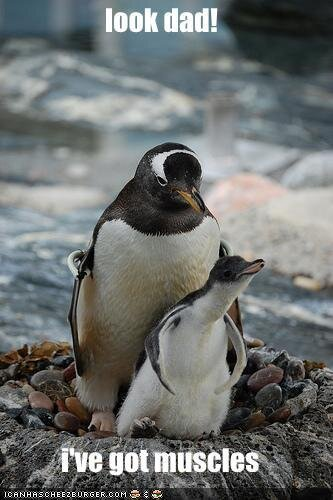 The World of Penguin