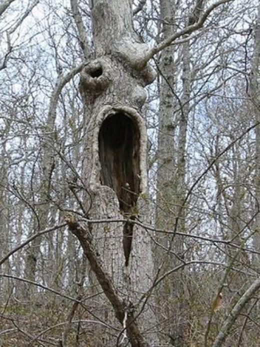 Beware of Living Trees!