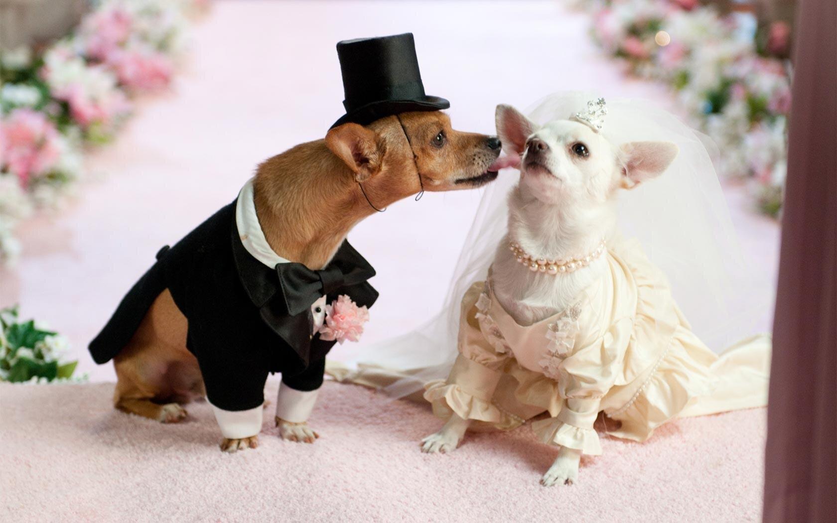 You May Kiss The... Bride?
