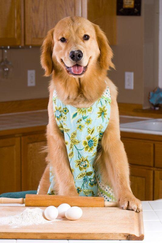 Don't Feel Like Cooking? Teach Your Pet to Make You Dinner:)