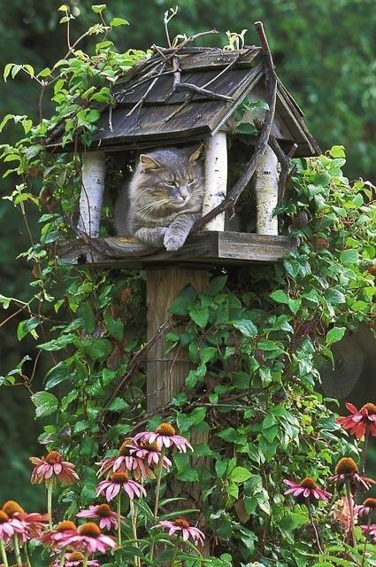 Cats and Bird Feeders от Marinara за 21 feb 2013
