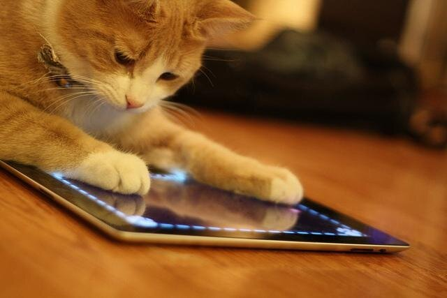 Cats and Ipads