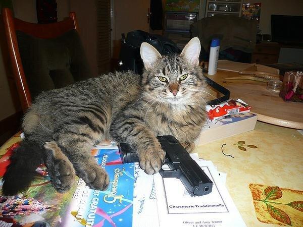 Atomic Kitten is REAL