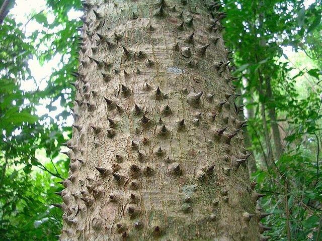 The Badass Tree