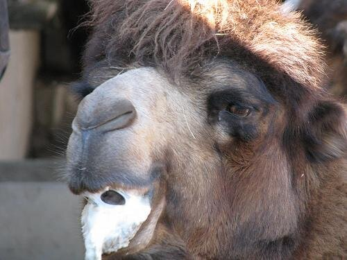 Camels on Drugs от Marinara за 06 mar 2013