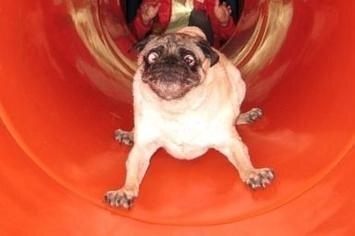 Funny Dogs on Slides