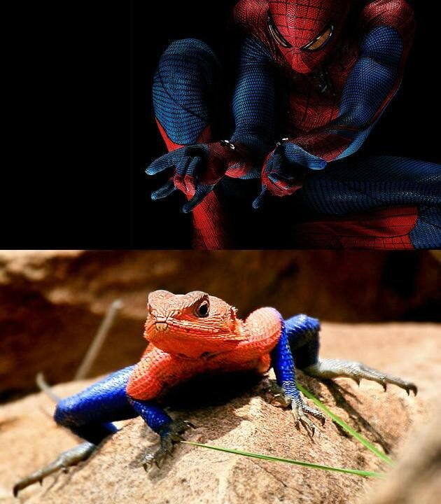 The Rare And Awesome Spiderman Lizard