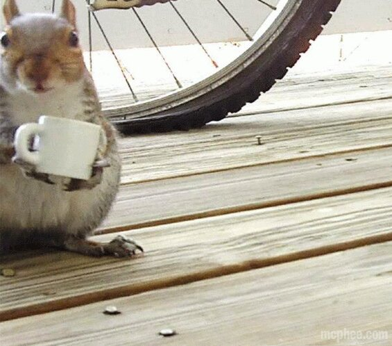 Squirrel Drinking from a Coffee Cup Made for Squirrels