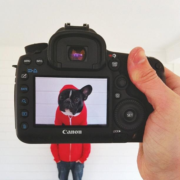 Funny Combo Portraits of Pets and Their Owners