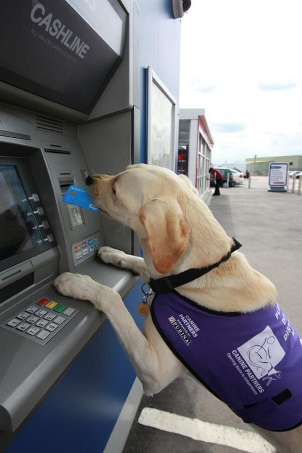 Amazing Capabilities of Service Dogs