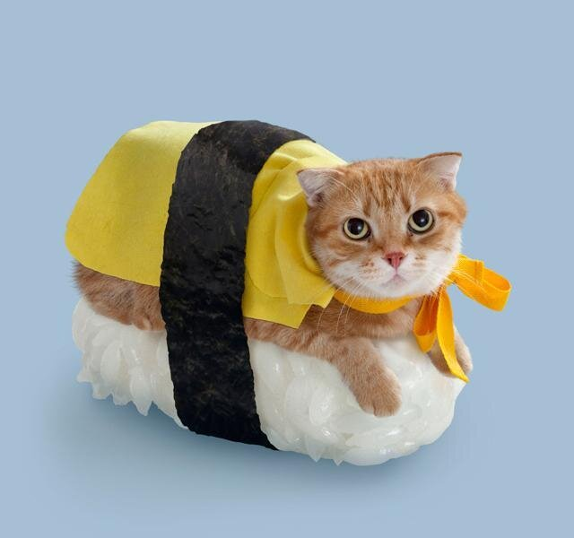Sushi Cats, Adorable Collection of Cats Resting on Sushi Rice от Marinara за 02 may 2013