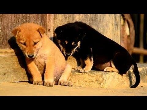 Compilation of Adorable Animals Trying to Stay Awake от Marinara за 03 may 2013