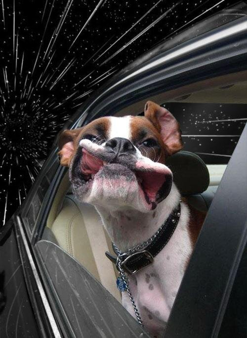 Dogs Hanging Out of Windows Photoshopped as Traveling Through Outer Space, Hilarious  от Marinara за 30 may 2013