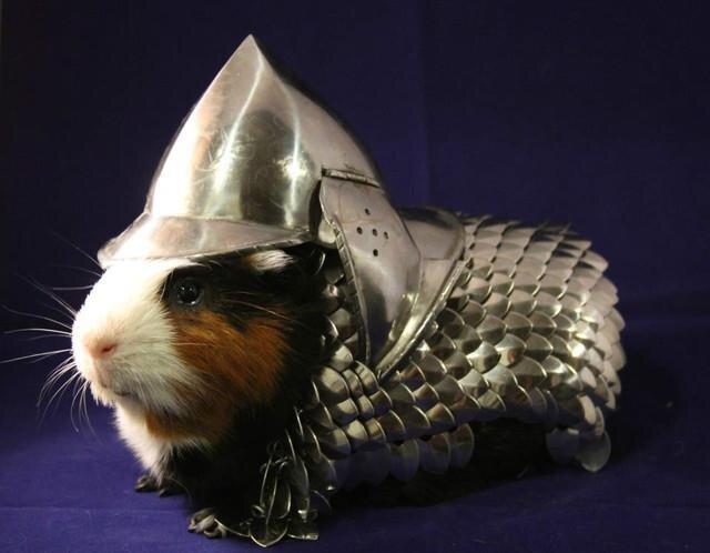 Guinea Pig Knight