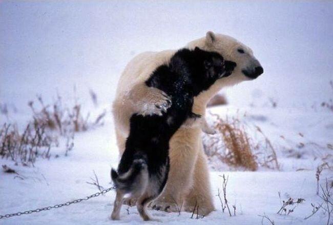 Медведь и собака стали лучшими друзьями (6 фото)