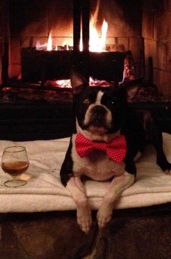 These animals know how to keep warm this winter