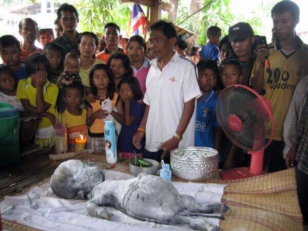 Пришелец из Таиланда (7 фото)