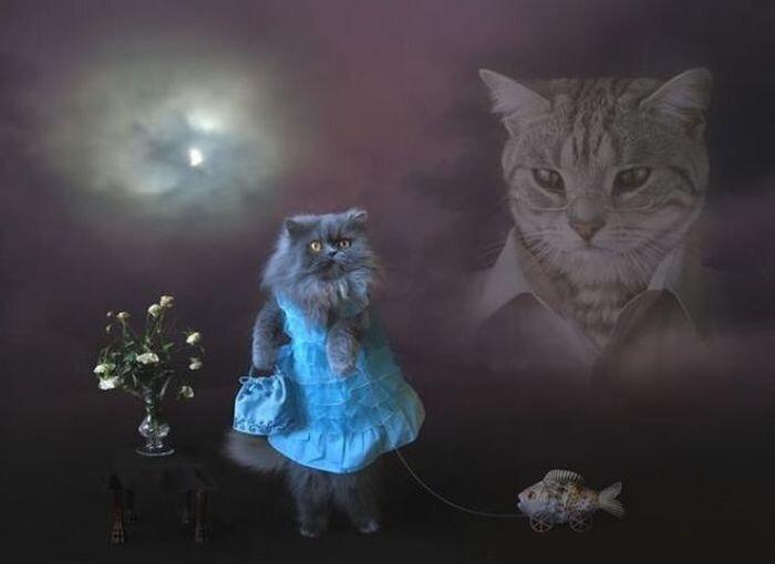 Прикол картинка от zubrilov за 05 декабря 2012