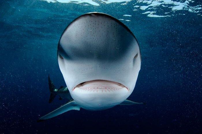 Промысел акул в Аравийском море (15 фото)