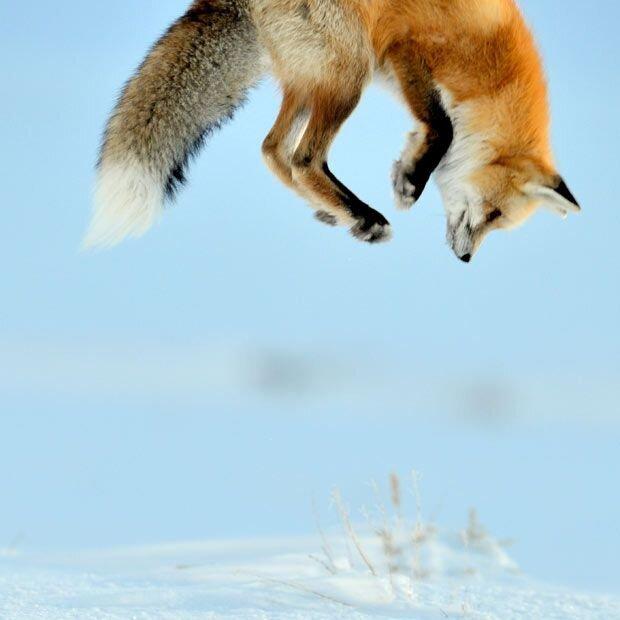 Пикантный фотоприкол от zubrilov за 07 декабря 2012