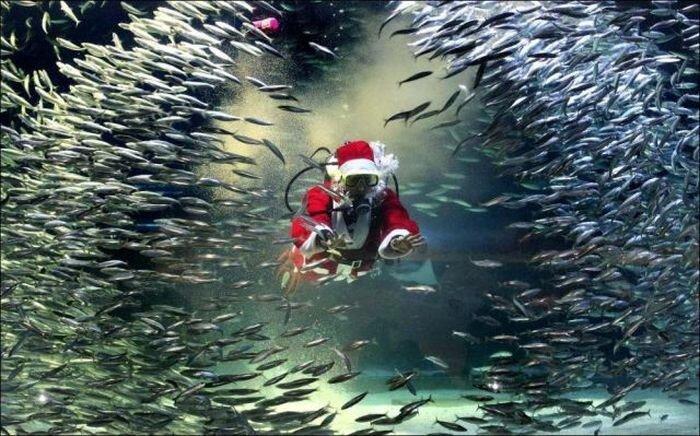 Смешной фотоприкол от zubrilov за 17 декабря 2012