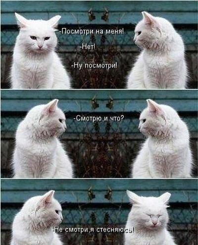 Красивые фото от zubrilov за 17 декабря 2012
