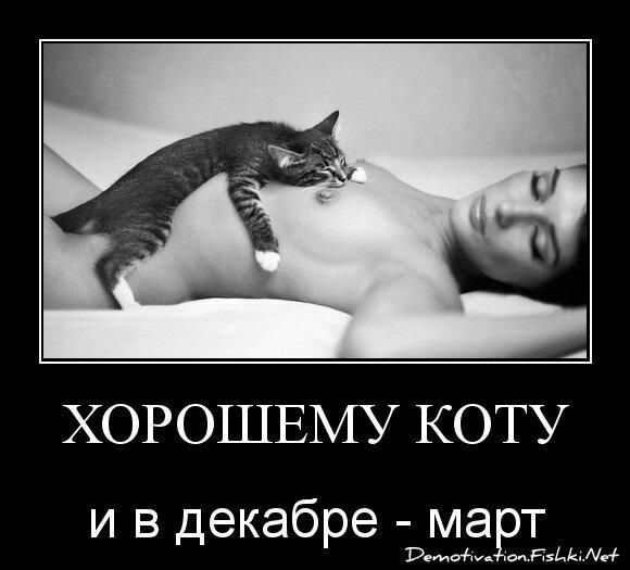 хорошему коту