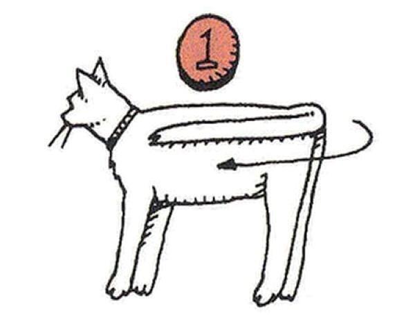 Инструкция по складыванию кота (5 фото)